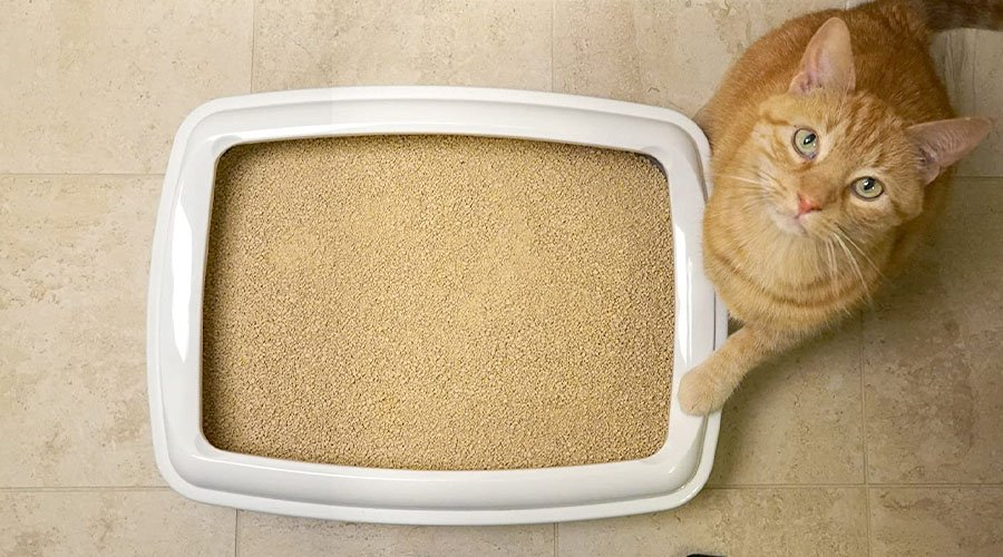 a cat next to a tray of the world's best cat littler